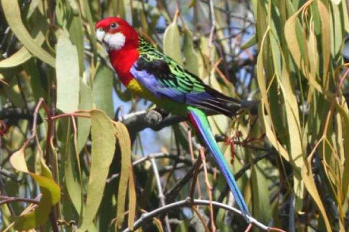 fauna at sweetwater creek