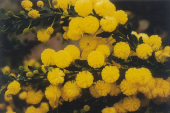 flora at sweetwater creek