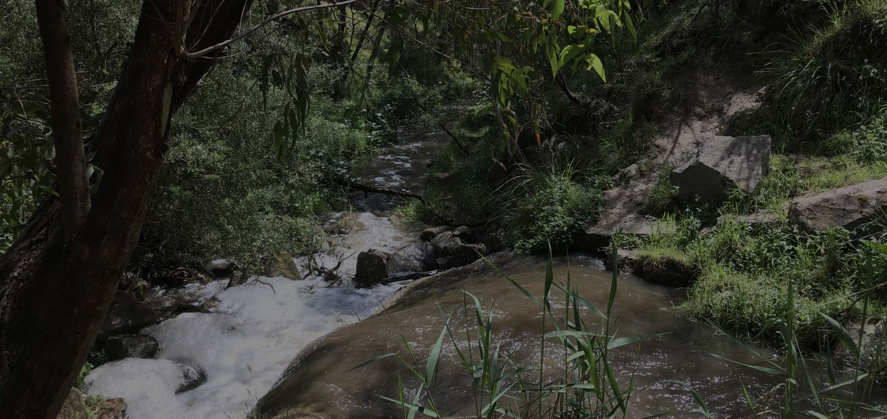 Sweetwater Creek Frankston Bushwalk | Mornington Peninsula Bushwalks